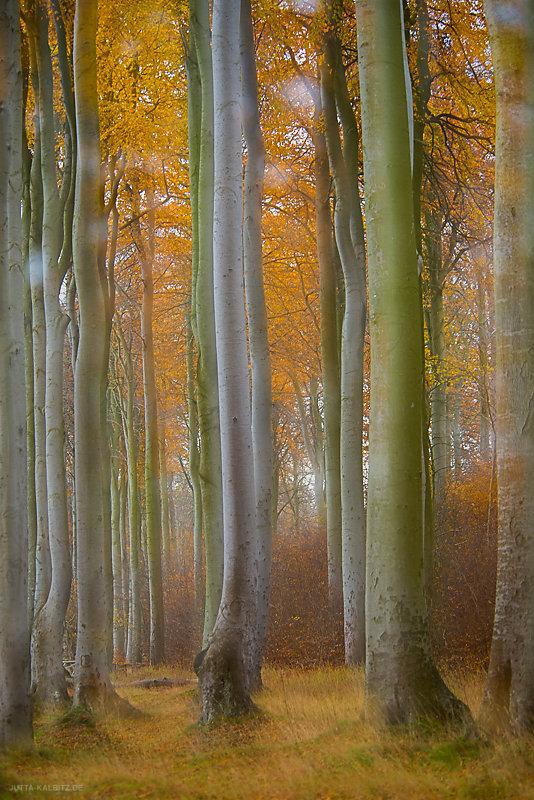Herbst-6.jpg