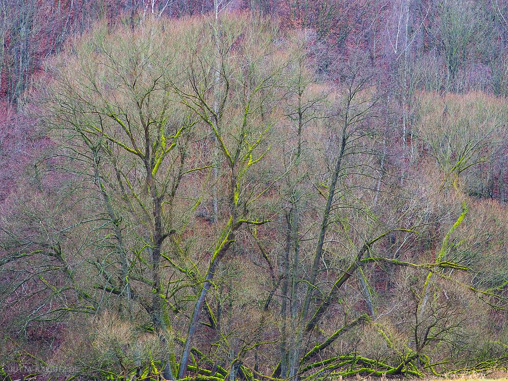 Dezember im Selketal - Harz