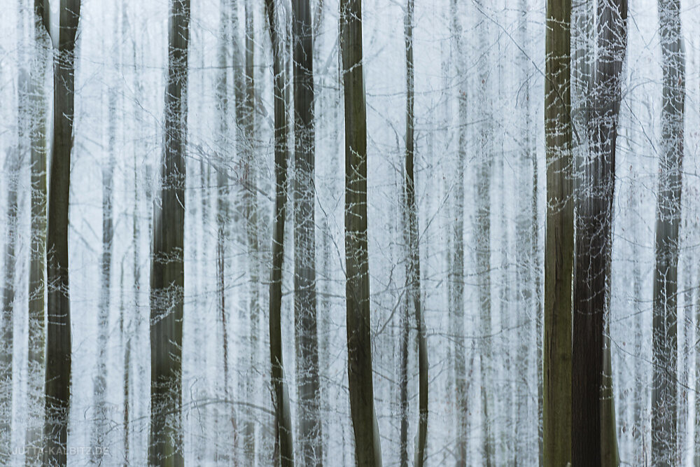 winterbaum-6.JPG