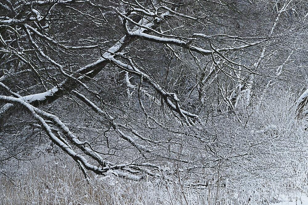 winterbaum-13.JPG