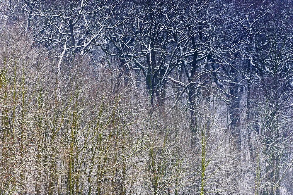 winterbaum-16.JPG