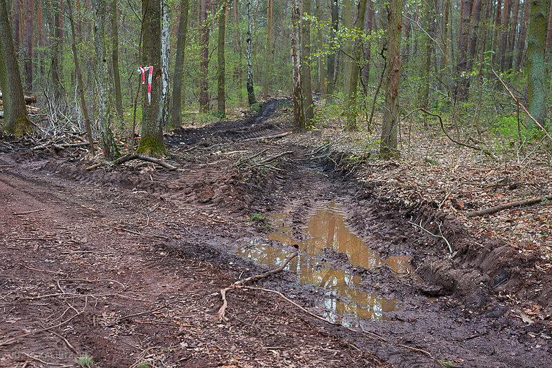 Doelauer-Heide-1-2.JPG