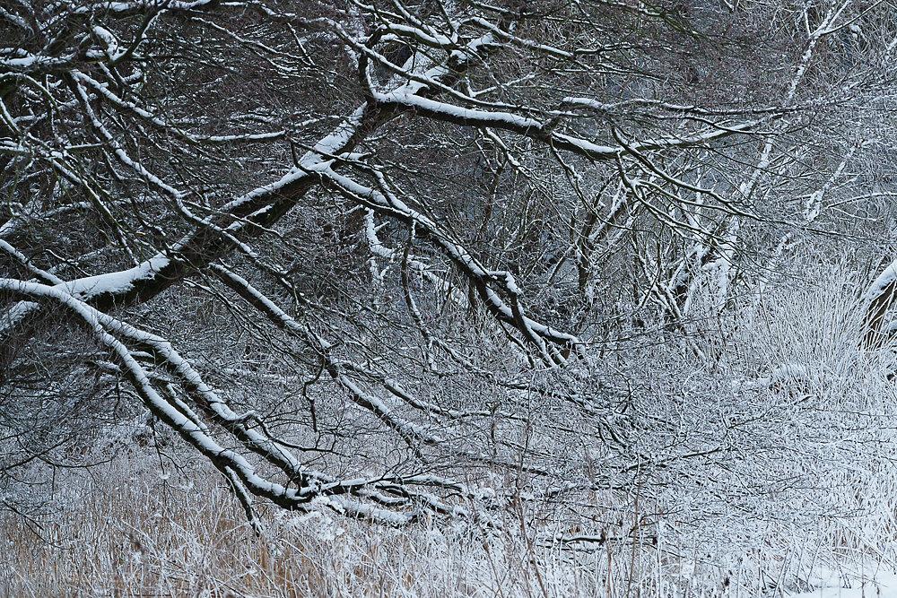 Winterbäume - Mansfelder Land