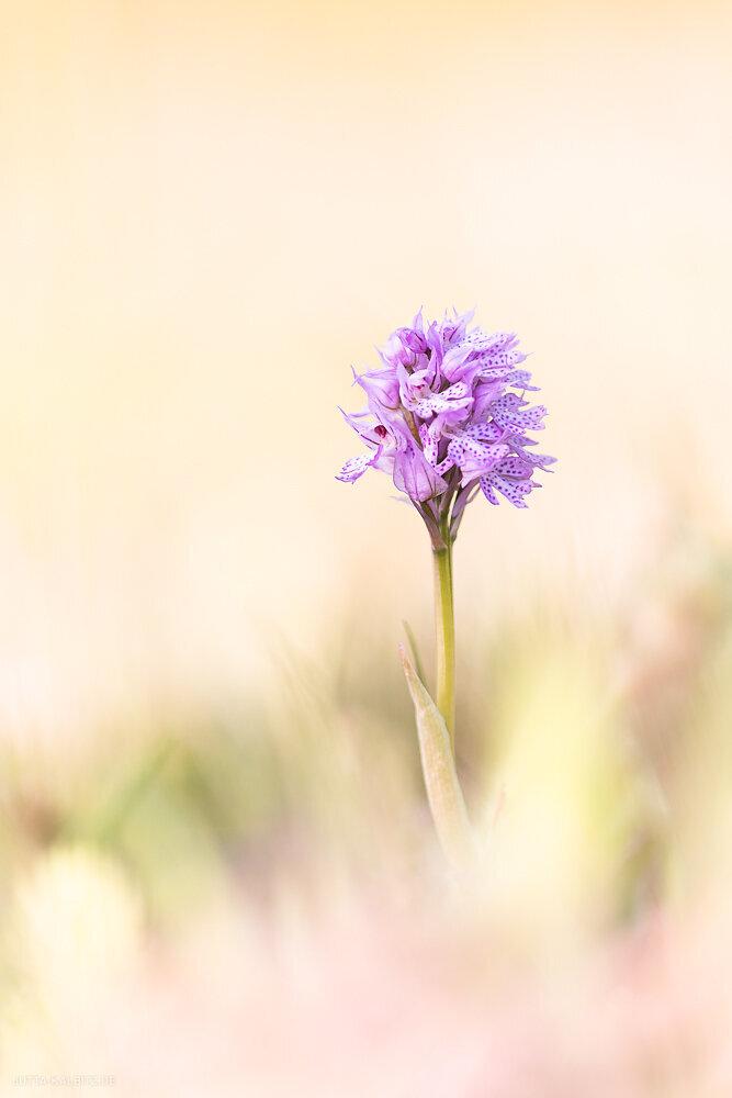 Orchideen-2020-2.JPG
